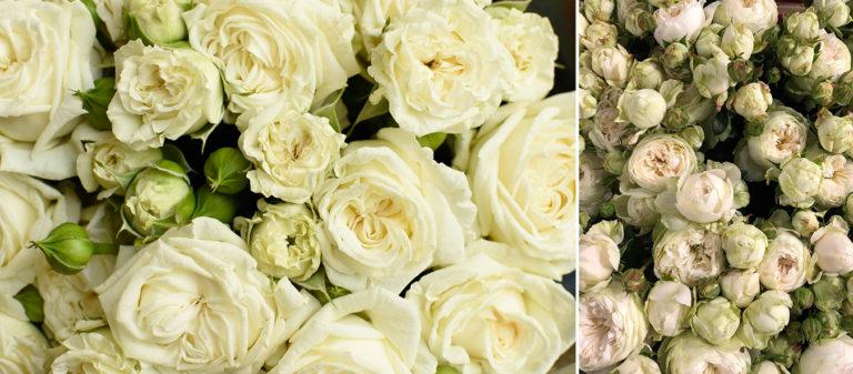 Fiori Tipo Rose.Pengo Fiorile 10 Principali Rose Per Matrimoni Pengo Fiori